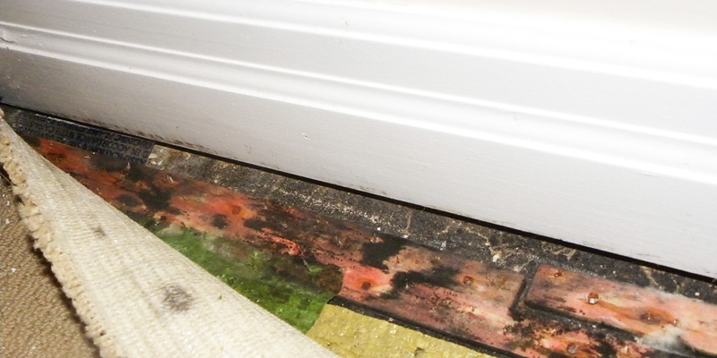 Mould remediation services